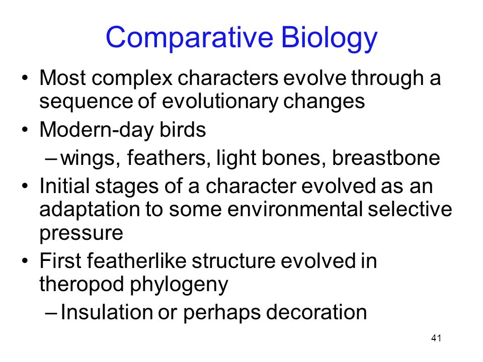 41 Most complex characters evolve through a sequence of evolutionary changes Modern-day birds –wings, feathers, light bones, breastbone Initial stages