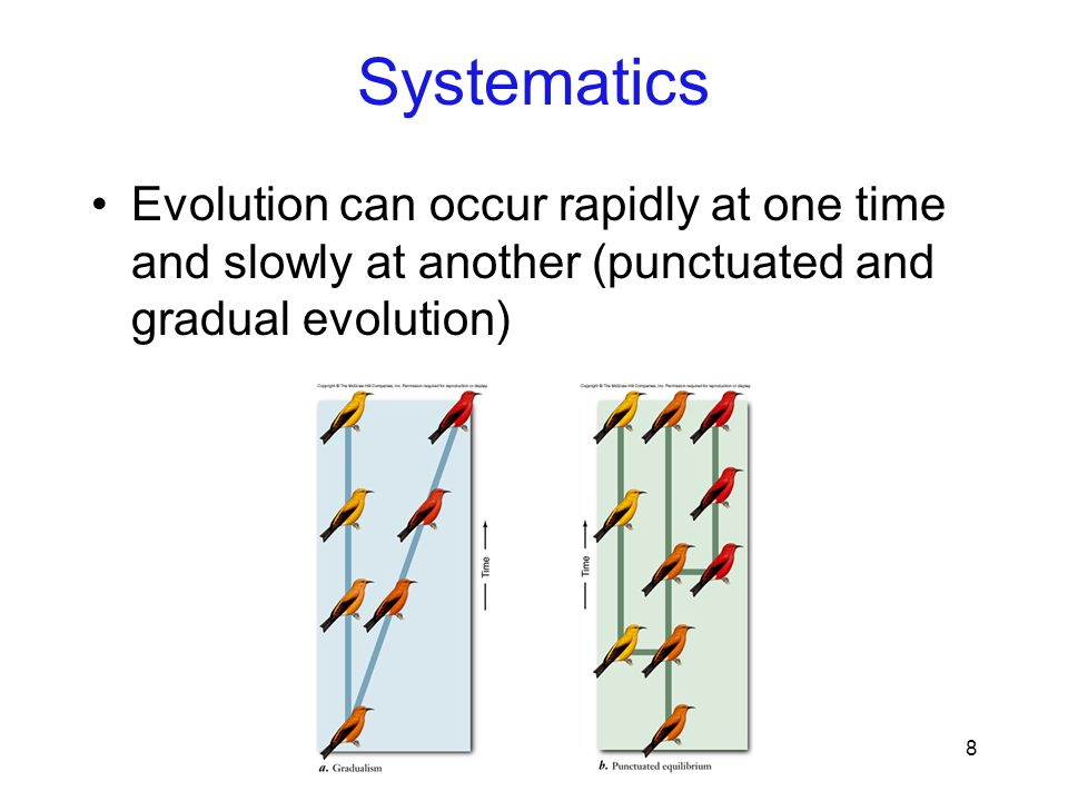 8 Evolution can occur rapidly at one time and slowly at another (punctuated and gradual evolution) Systematics