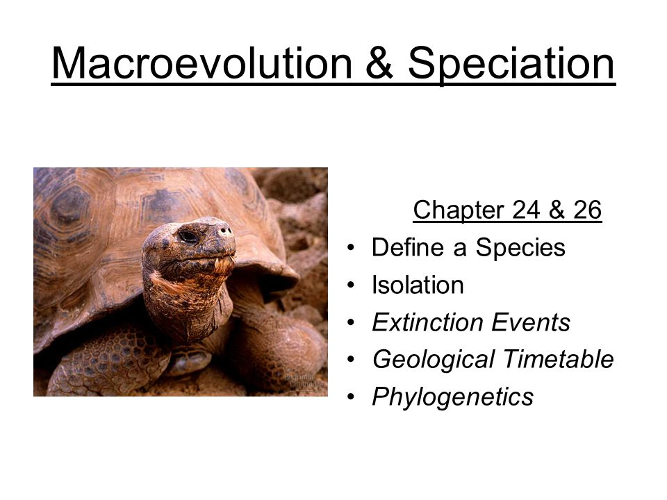 Macroevolution & Speciation Chapter 24 & 26 Define a Species Isolation Extinction Events Geological Timetable Phylogenetics