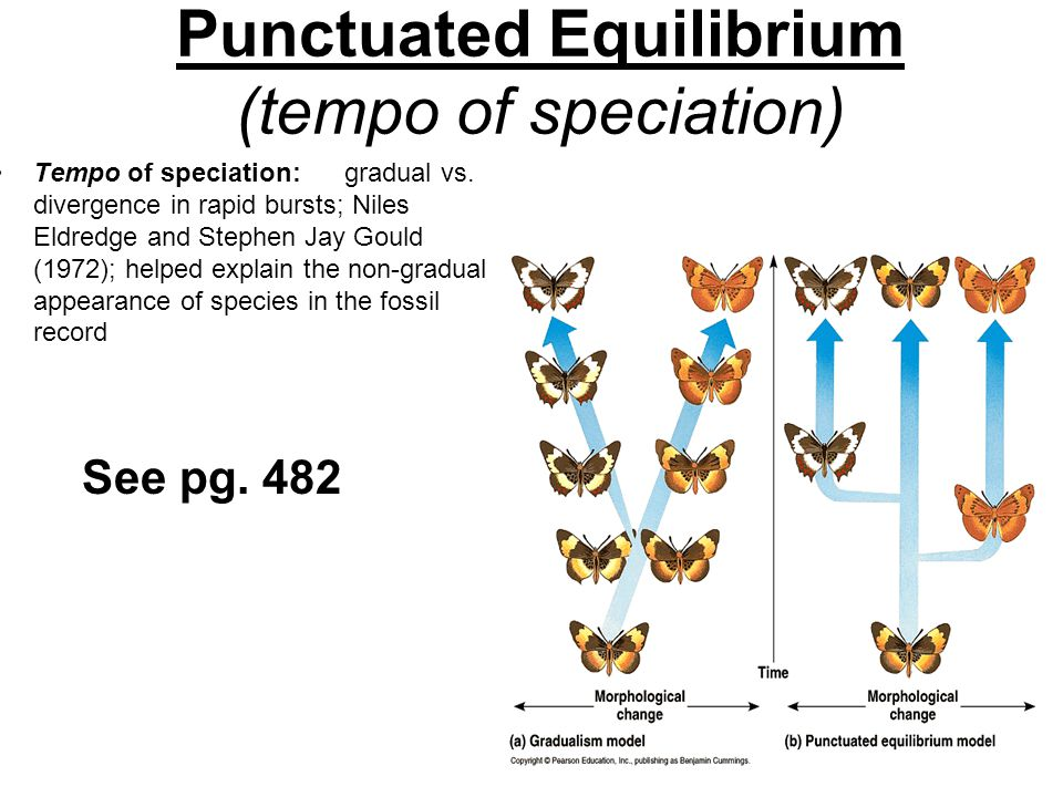 Punctuated Equilibrium (tempo of speciation) Tempo of speciation: gradual vs.