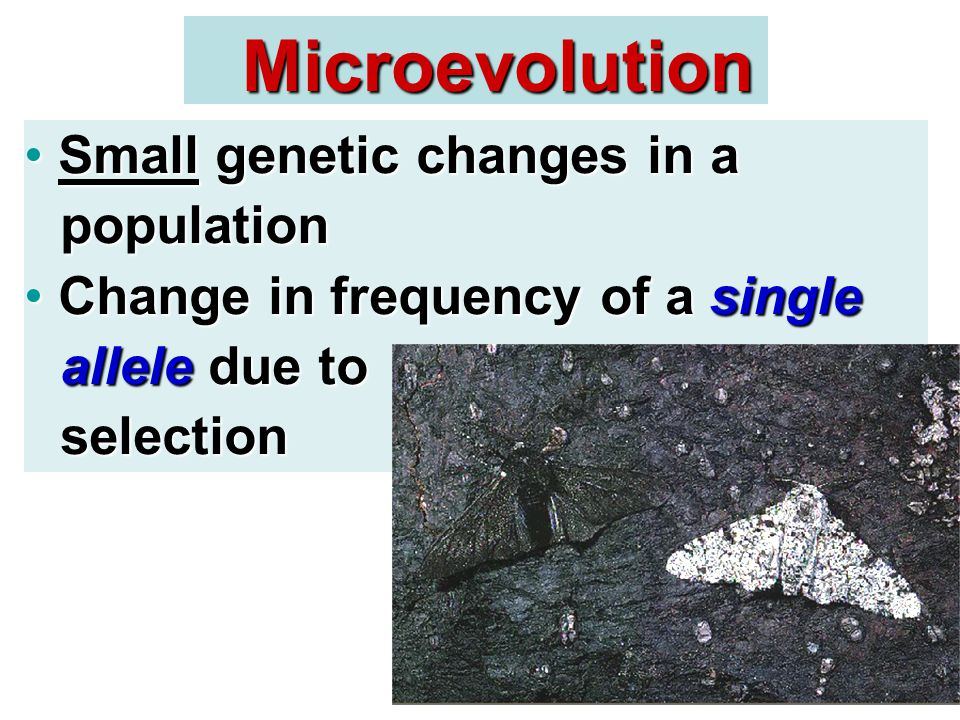 Microevolution Small genetic changes in a population Small genetic changes in a population Change in frequency of a single allele due to selection Change in frequency of a single allele due to selection