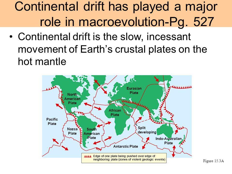 Continental drift is the slow, incessant movement of Earth's crustal plates on the hot mantle Continental drift has played a major role in macroevolution-Pg.