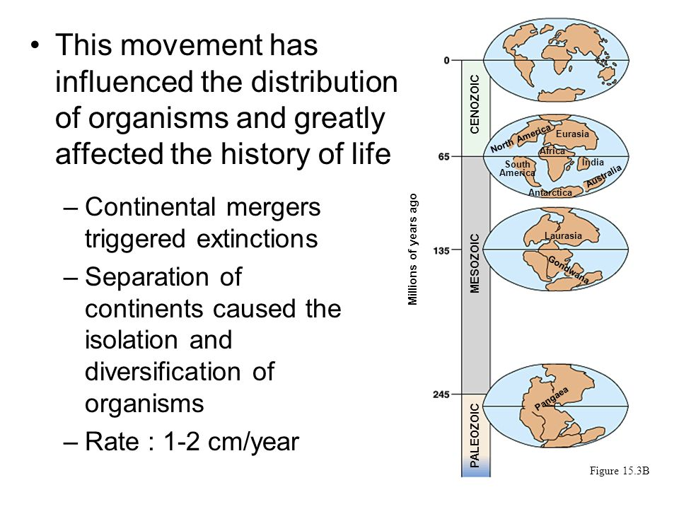 This movement has influenced the distribution of organisms and greatly affected the history of life –Continental mergers triggered extinctions –Separation of continents caused the isolation and diversification of organisms –Rate : 1-2 cm/year Figure 15.3B Millions of years ago Eurasia CENOZOIC MESOZOIC PALEOZOIC North America Africa India South America Antarctica Australia Laurasia Gondwana Pangaea