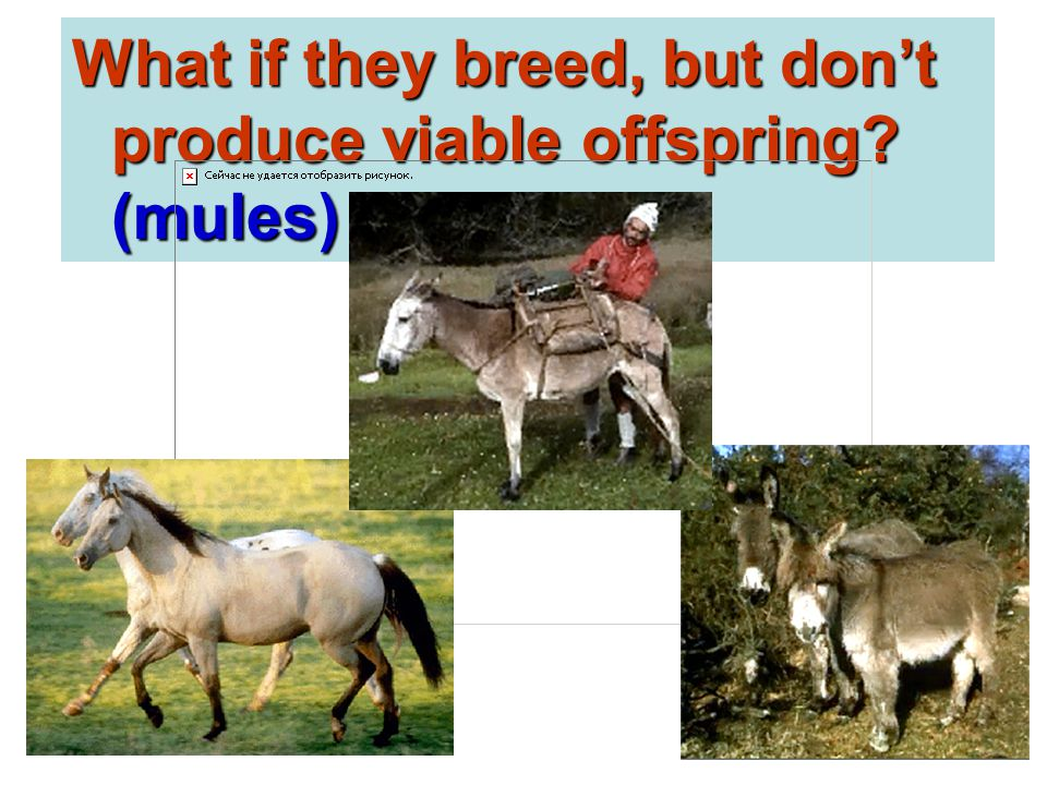 What if they breed, but don't produce viable offspring? (mules)