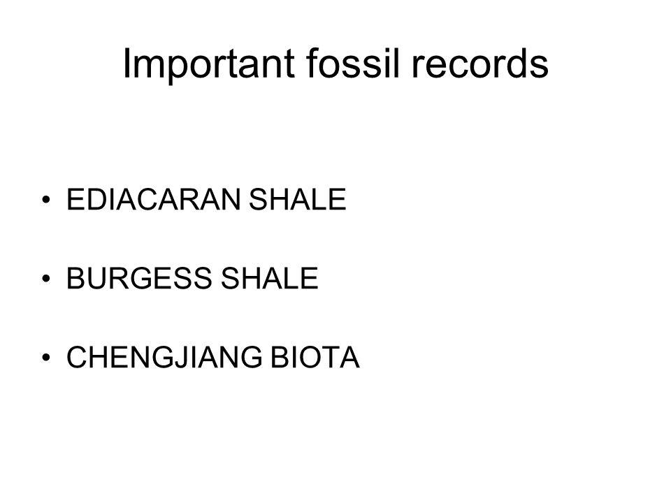 Important fossil records EDIACARAN SHALE BURGESS SHALE CHENGJIANG BIOTA