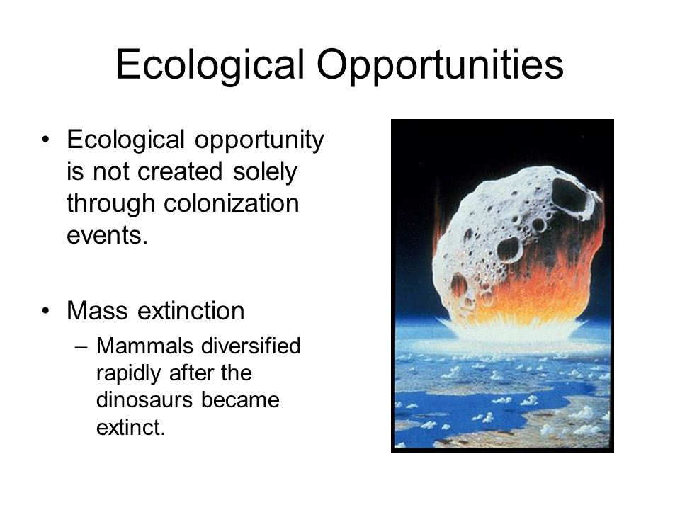 Ecological Opportunities Ecological opportunity is not created solely through colonization events.