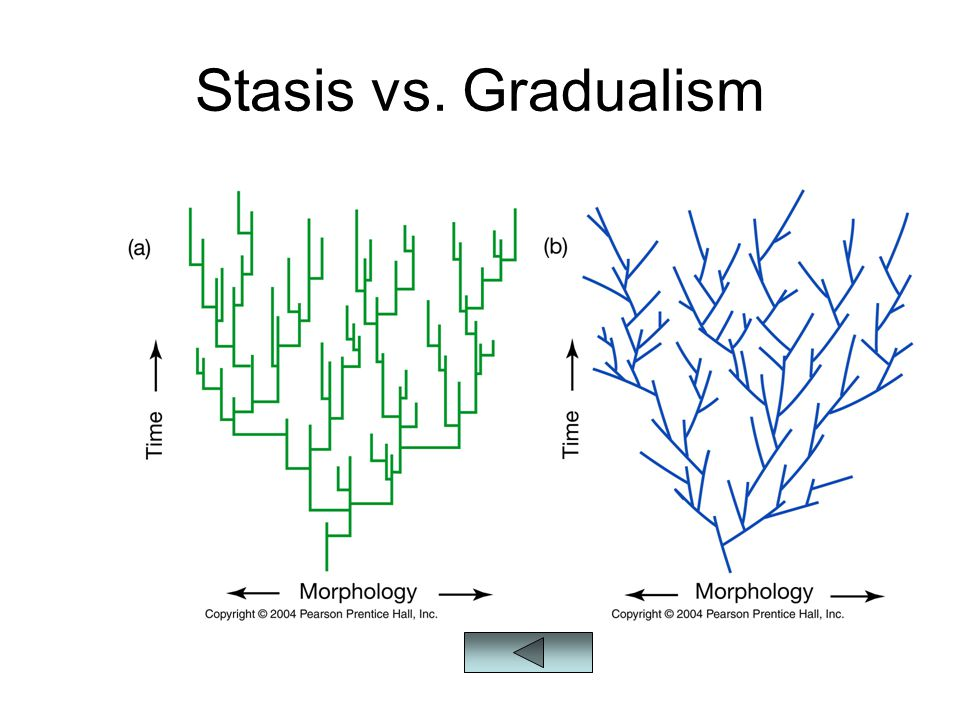 Stasis vs. Gradualism