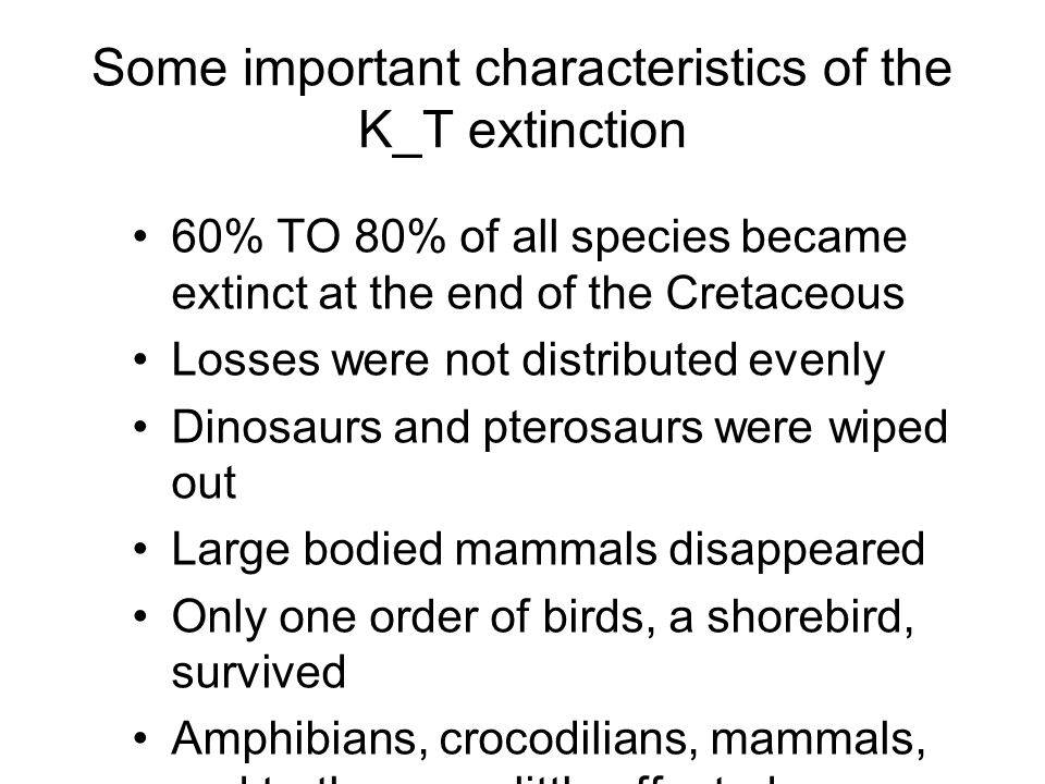 Some important characteristics of the K_T extinction 60% TO 80% of all species became extinct at the end of the Cretaceous Losses were not distributed evenly Dinosaurs and pterosaurs were wiped out Large bodied mammals disappeared Only one order of birds, a shorebird, survived Amphibians, crocodilians, mammals, and turtles were little affected