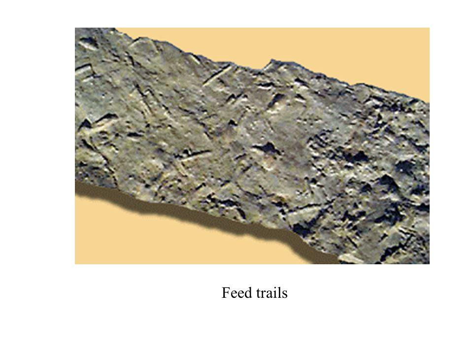 Feed trails
