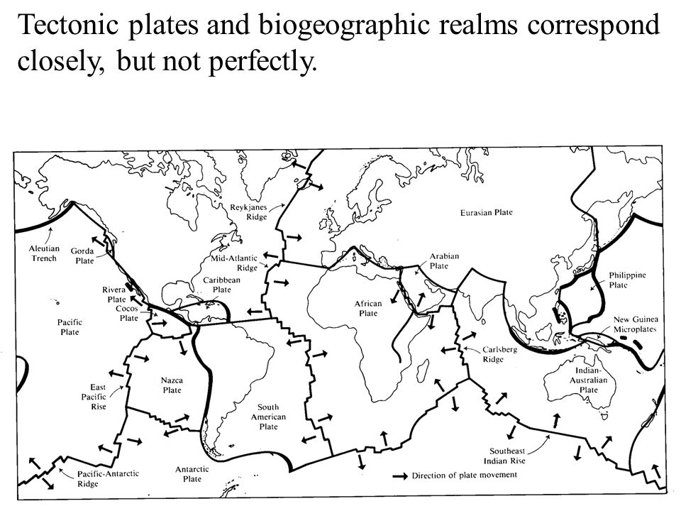 Tectonic plates and biogeographic realms correspond closely, but not perfectly.