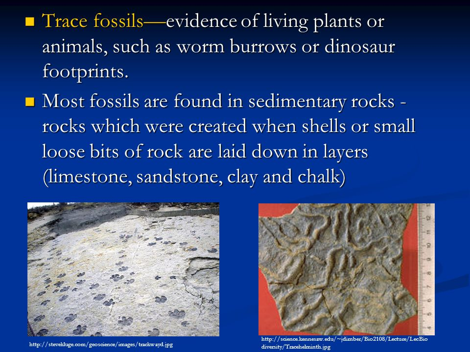 Trace fossils — evidence of living plants or animals, such as worm burrows or dinosaur footprints. Trace fossils — evidence of living plants or animal
