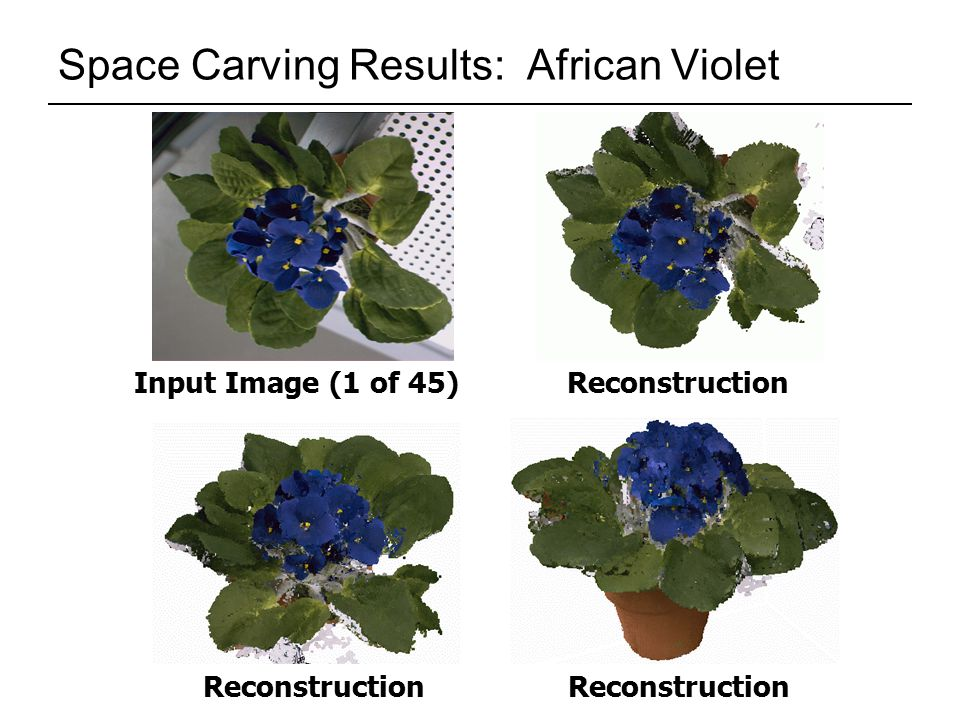 Space Carving Results: African Violet Input Image (1 of 45)Reconstruction
