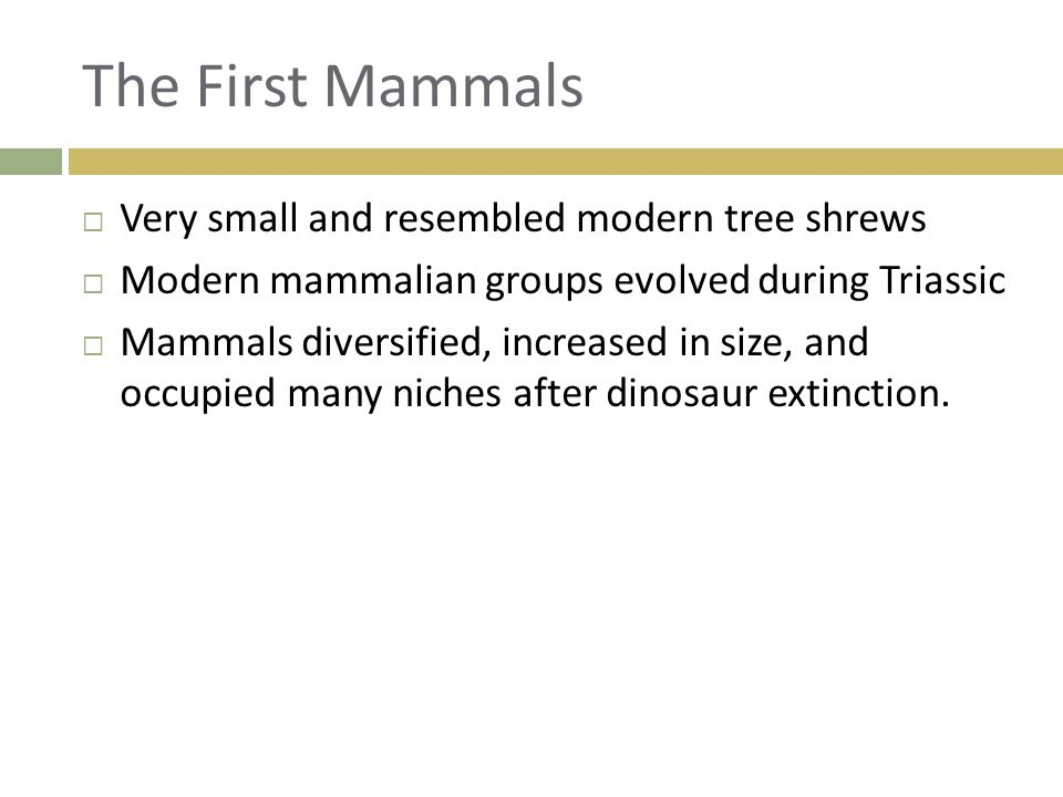 The First Mammals  Very small and resembled modern tree shrews  Modern mammalian groups evolved during Triassic  Mammals diversified, increased in