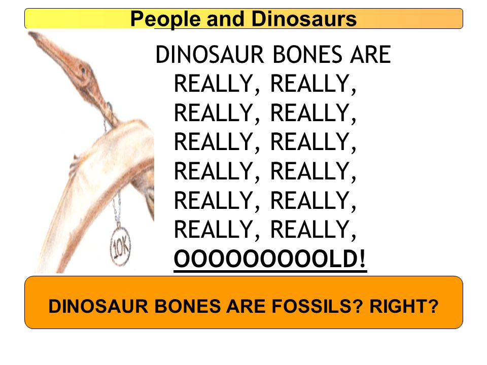 People and Dinosaurs DINOSAUR BONES ARE REALLY, REALLY, REALLY, REALLY, REALLY, REALLY, REALLY, REALLY, REALLY, REALLY, REALLY, REALLY, OOOOOOOOOLD.