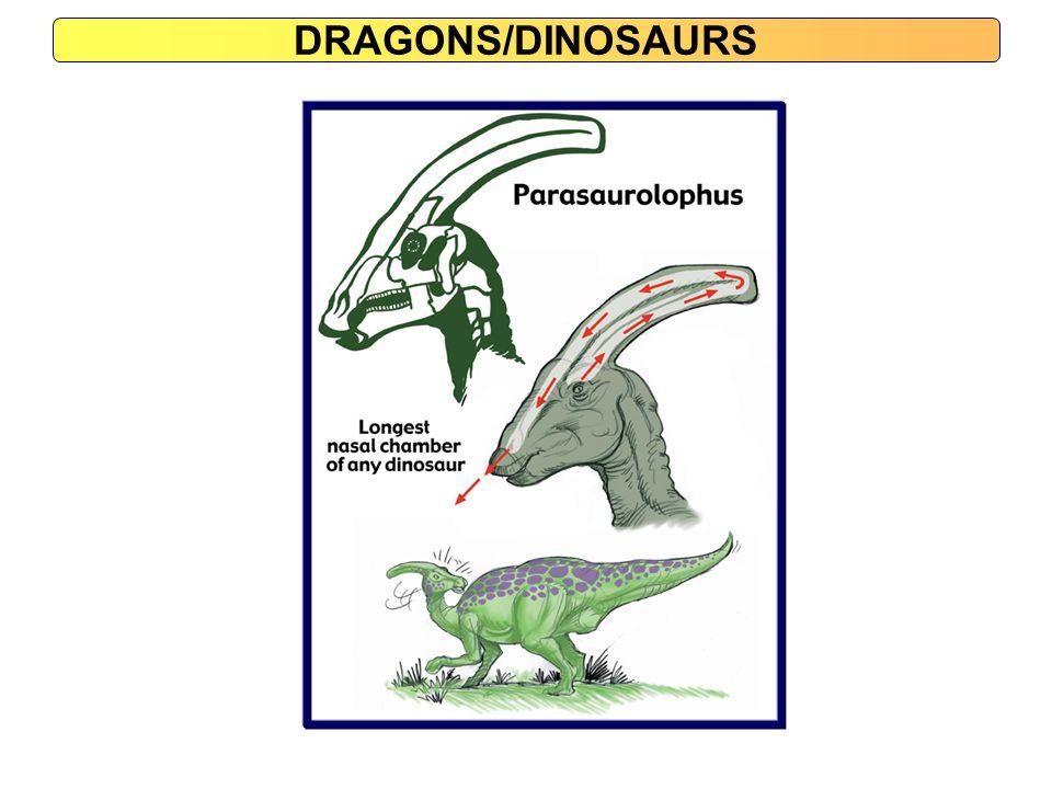 DRAGONS/DINOSAURS