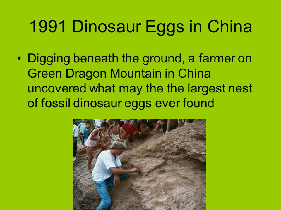 1991 Dinosaur Eggs in China Digging beneath the ground, a farmer on Green Dragon Mountain in China uncovered what may the the largest nest of fossil d