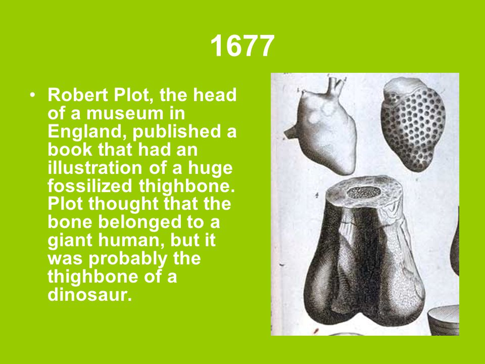 1677 Robert Plot, the head of a museum in England, published a book that had an illustration of a huge fossilized thighbone. Plot thought that the bon
