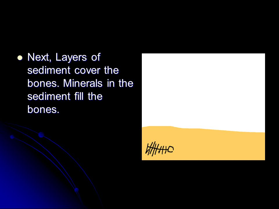 Next, Layers of sediment cover the bones.Minerals in the sediment fill the bones.
