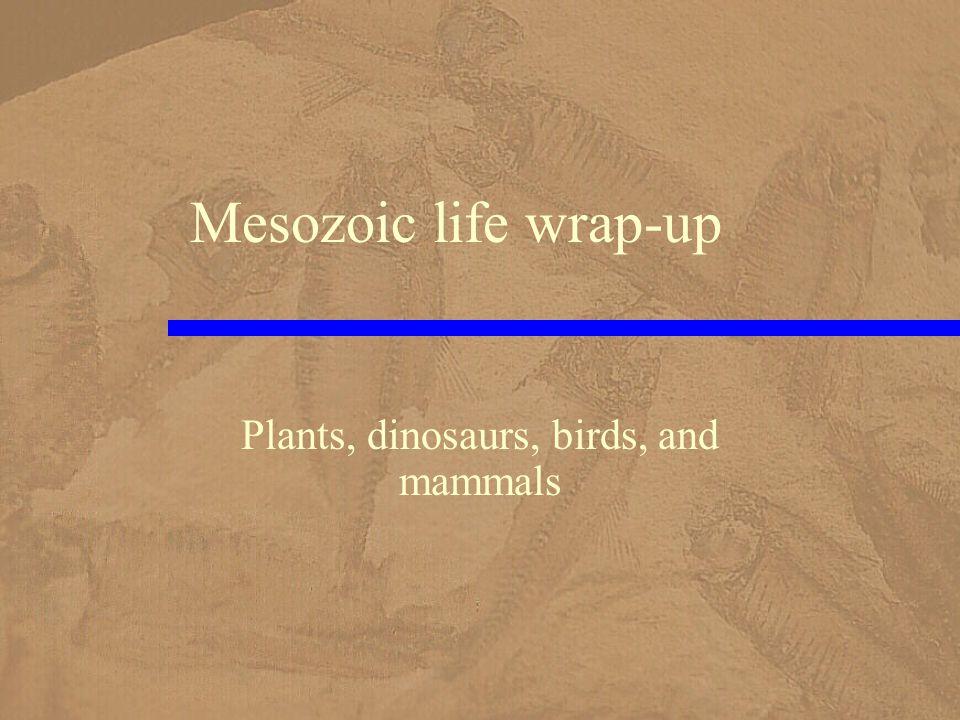 Mesozoic life wrap-up Plants, dinosaurs, birds, and mammals