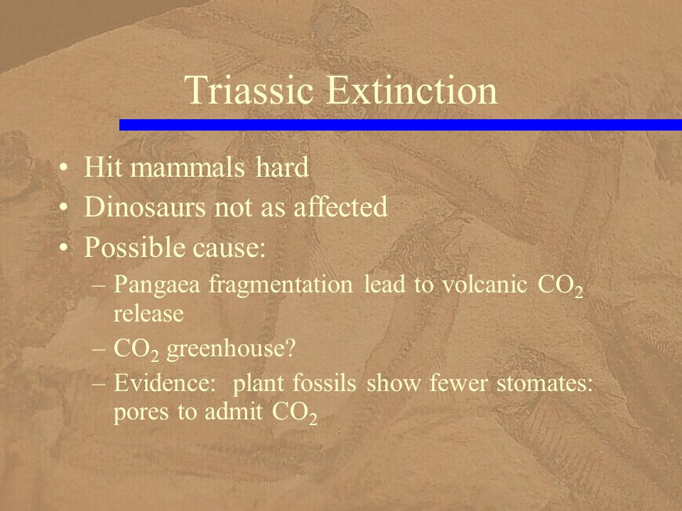 Hit mammals hard Dinosaurs not as affected Possible cause: –Pangaea fragmentation lead to volcanic CO 2 release –CO 2 greenhouse.