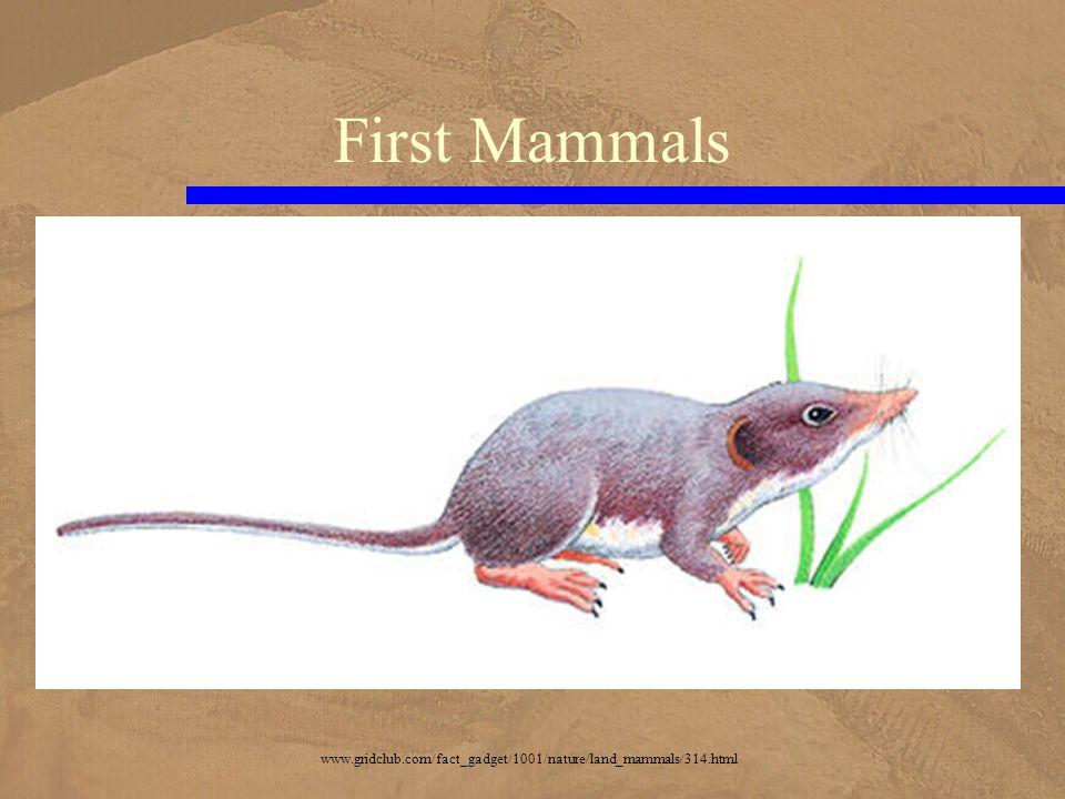 First Mammals www.gridclub.com/fact_gadget/1001/nature/land_mammals/314.html