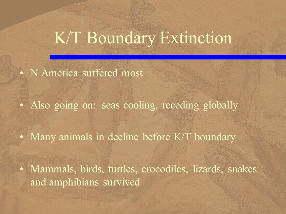 K/T Boundary Extinction N America suffered most Also going on: seas cooling, receding globally Many animals in decline before K/T boundary Mammals, birds, turtles, crocodiles, lizards, snakes and amphibians survived