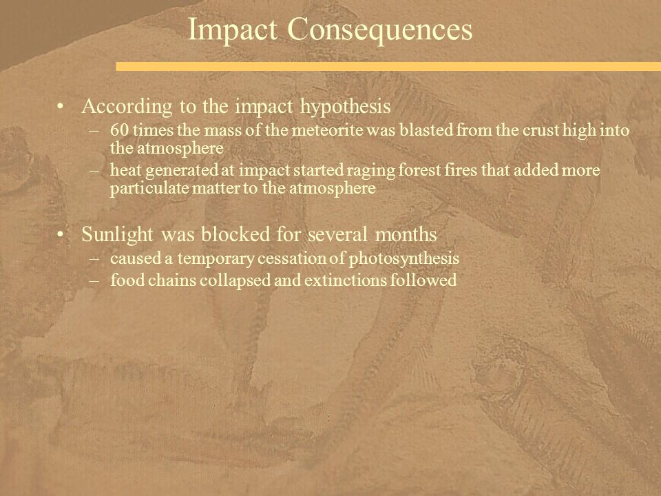 According to the impact hypothesis –60 times the mass of the meteorite was blasted from the crust high into the atmosphere –heat generated at impact started raging forest fires that added more particulate matter to the atmosphere Sunlight was blocked for several months –caused a temporary cessation of photosynthesis –food chains collapsed and extinctions followed Impact Consequences