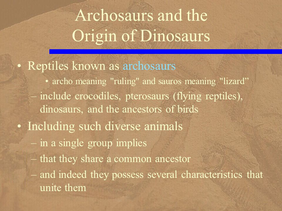 Reptiles known as archosaurs archo meaning