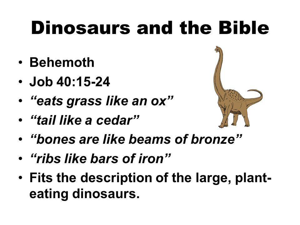 "Dinosaurs and the Bible Behemoth Job 40:15-24 ""eats grass like an ox"" ""tail like a cedar"" ""bones are like beams of bronze"" ""ribs like bars of iron"" Fi"