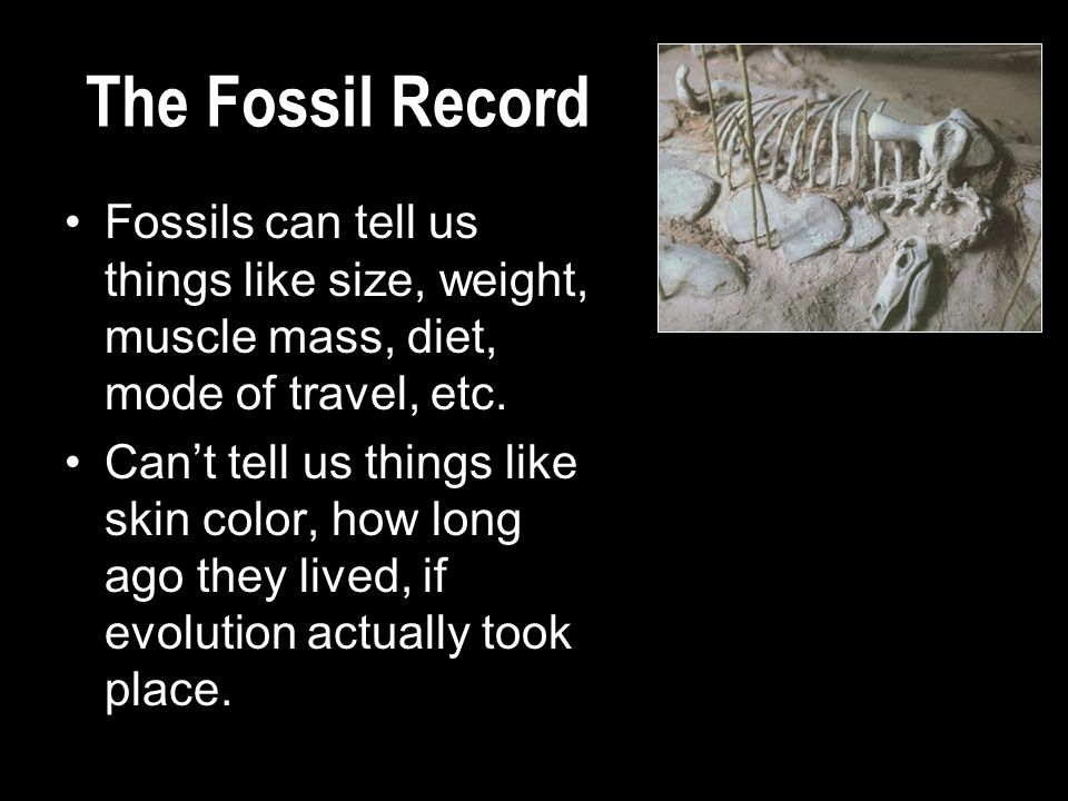 The Fossil Record Fossils can tell us things like size, weight, muscle mass, diet, mode of travel, etc. Can't tell us things like skin color, how long