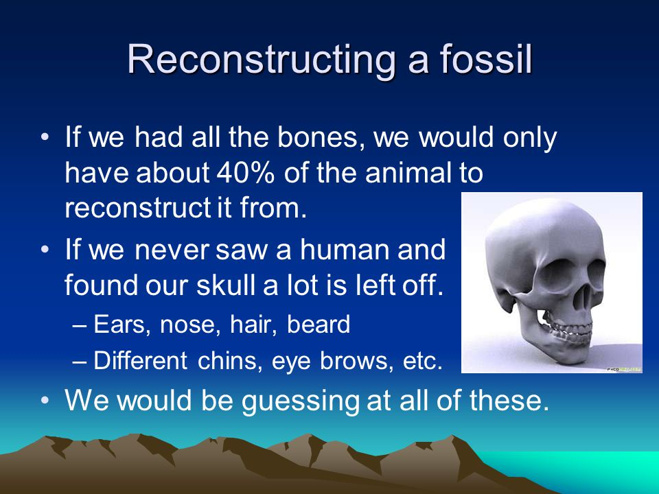 Reconstructing a fossil If we had all the bones, we would only have about 40% of the animal to reconstruct it from.