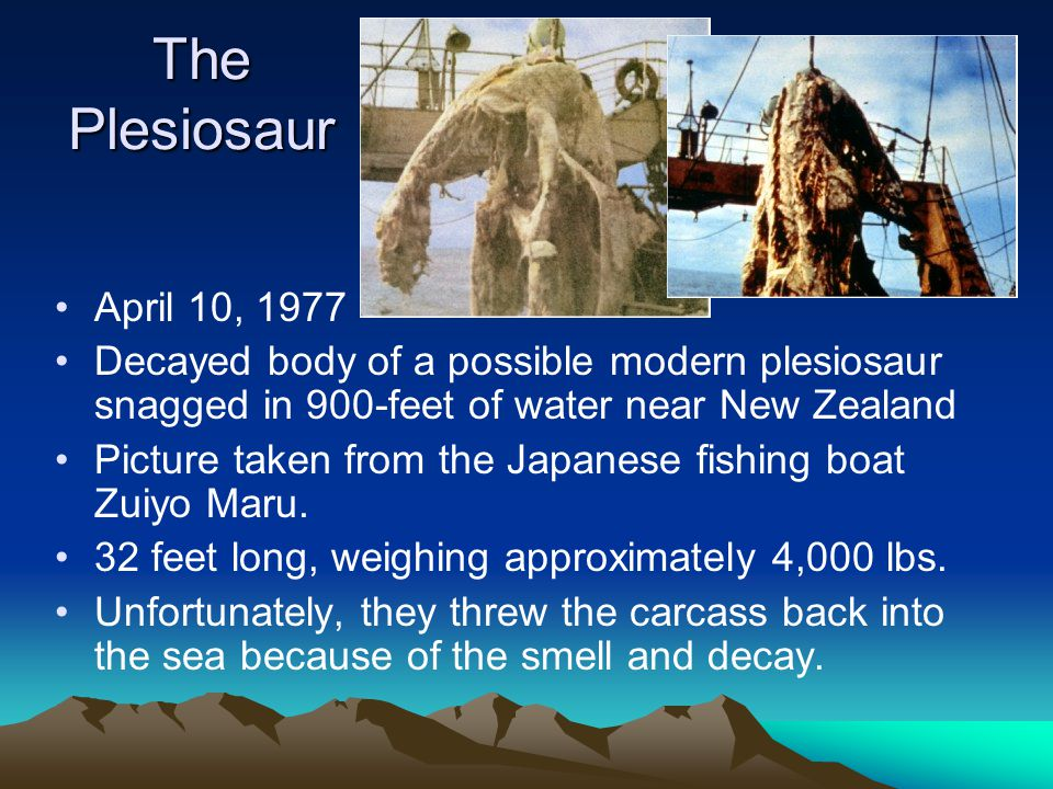 The Plesiosaur April 10, 1977 Decayed body of a possible modern plesiosaur snagged in 900-feet of water near New Zealand Picture taken from the Japanese fishing boat Zuiyo Maru.