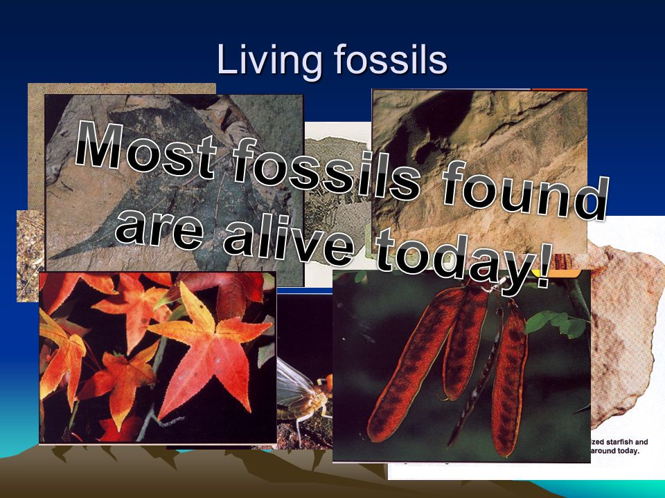 Living fossils Remember the living fossils?
