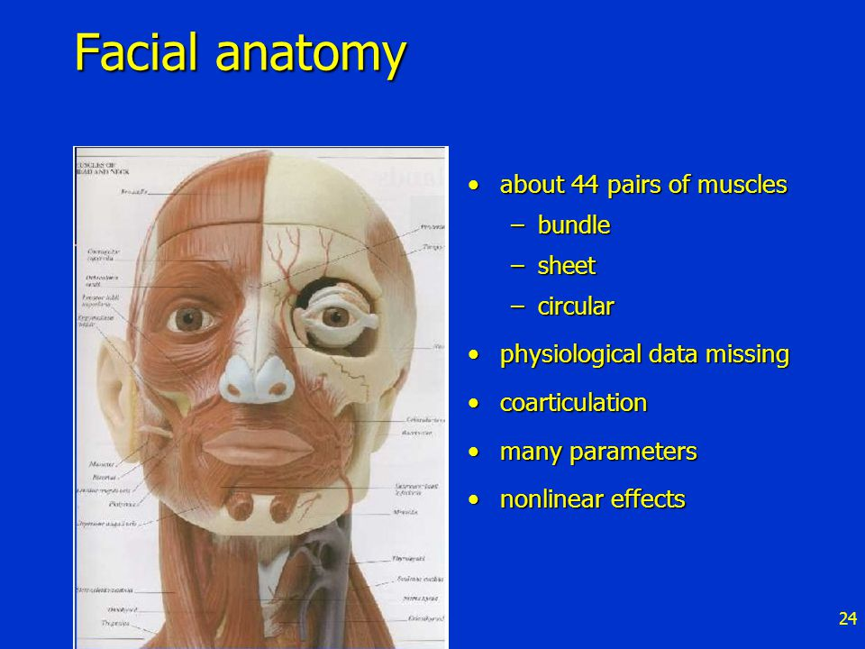 24 Facial anatomy about 44 pairs of musclesabout 44 pairs of muscles –bundle –sheet –circular physiological data missingphysiological data missing coarticulationcoarticulation many parametersmany parameters nonlinear effectsnonlinear effects