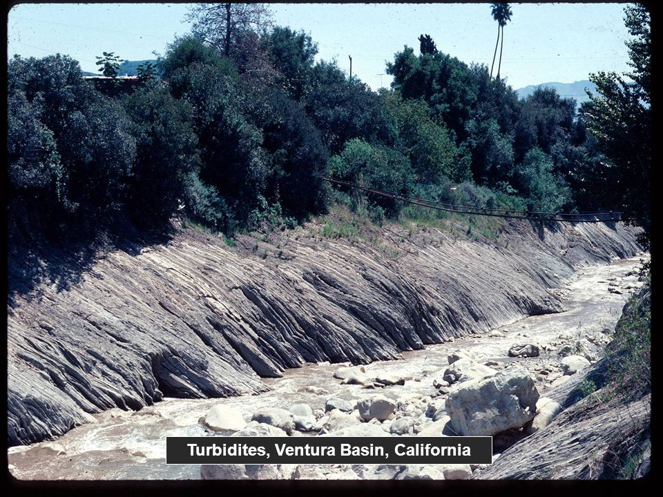 Turbidites, Ventura Basin, California