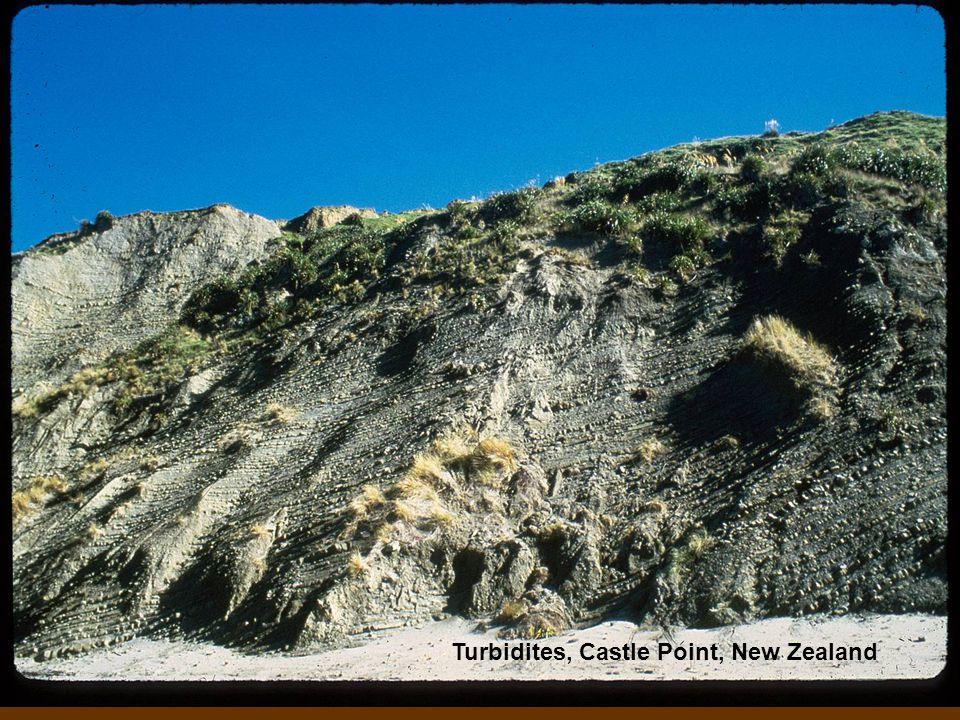 Turbidites, Castle Point, New Zealand