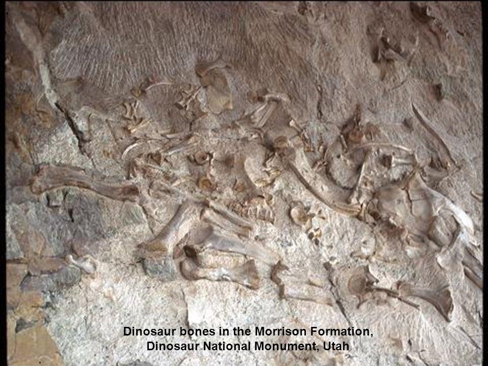 Dinosaur bones in the Morrison Formation, Dinosaur National Monument, Utah