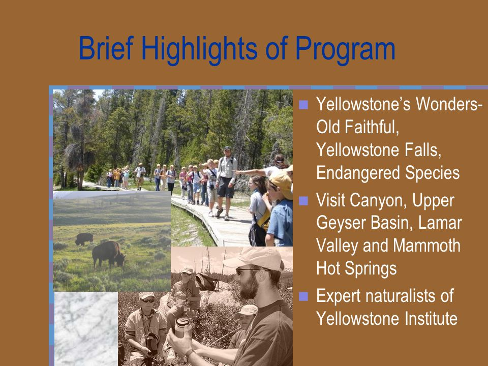 Brief Highlights of Program Yellowstone's Wonders- Old Faithful, Yellowstone Falls, Endangered Species Visit Canyon, Upper Geyser Basin, Lamar Valley and Mammoth Hot Springs Expert naturalists of Yellowstone Institute