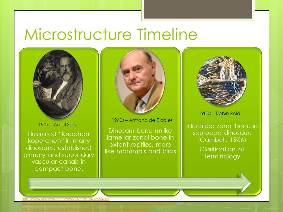 Microstructure Timeline Illustrated Knochen koperchen in many dinosaurs, established primary and secondary vascular canals in compact bone.