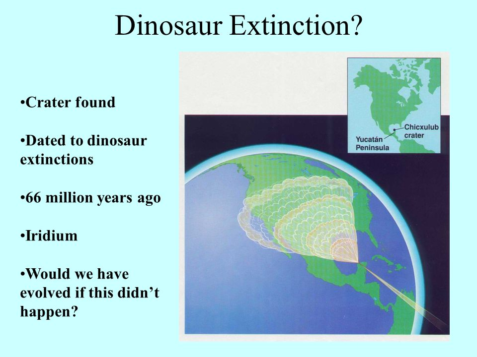 Crater found Dated to dinosaur extinctions 66 million years ago Iridium Would we have evolved if this didn't happen? Dinosaur Extinction?