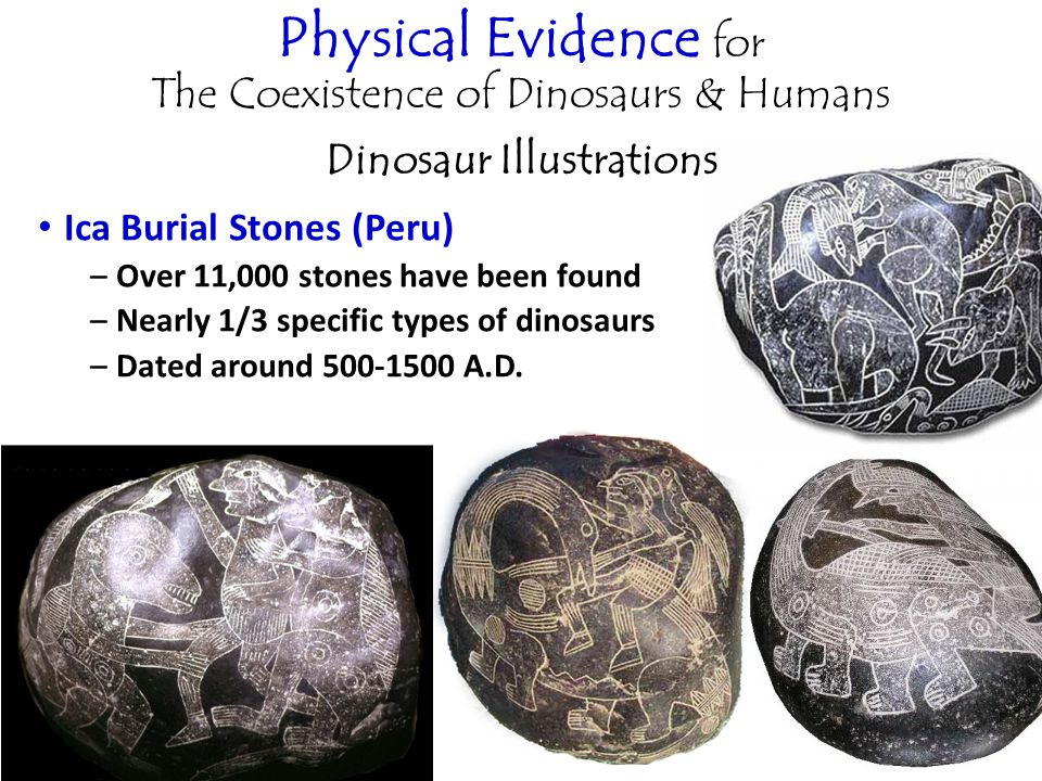 Physical Evidence for The Coexistence of Dinosaurs & Humans Dinosaur Illustrations Ica Burial Stones (Peru) –Over 11,000 stones have been found –Nearly 1/3 specific types of dinosaurs –Dated around 500-1500 A.D.