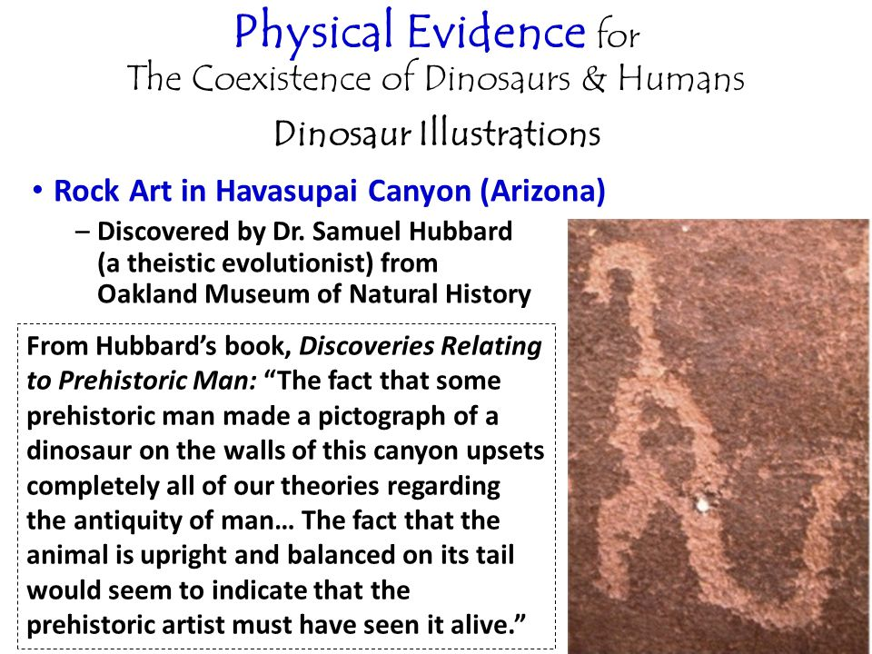 Physical Evidence for The Coexistence of Dinosaurs & Humans Dinosaur Illustrations Rock Art in Havasupai Canyon (Arizona) –Discovered by Dr.