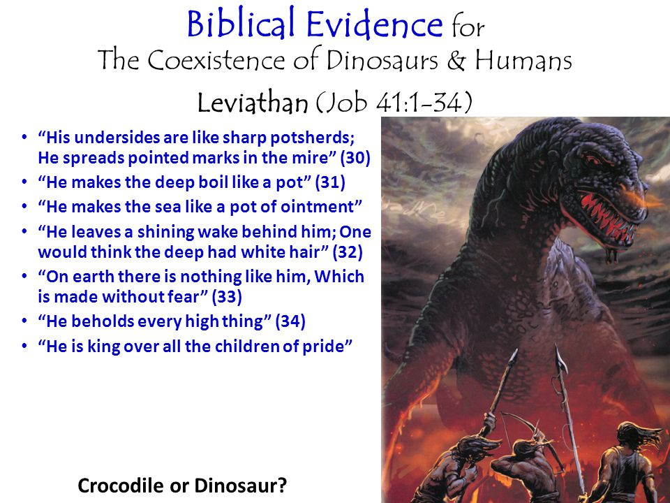 Biblical Evidence for The Coexistence of Dinosaurs & Humans Leviathan (Job 41:1-34) His undersides are like sharp potsherds; He spreads pointed marks in the mire (30) He makes the deep boil like a pot (31) He makes the sea like a pot of ointment He leaves a shining wake behind him; One would think the deep had white hair (32) On earth there is nothing like him, Which is made without fear (33) He beholds every high thing (34) He is king over all the children of pride Crocodile or Dinosaur