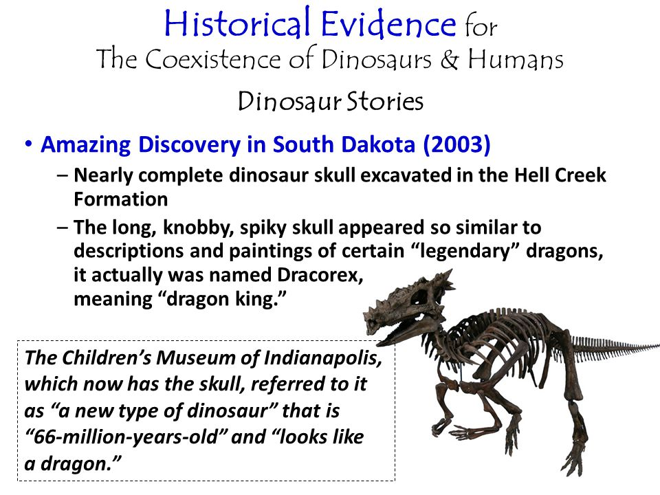Historical Evidence for The Coexistence of Dinosaurs & Humans Dinosaur Stories Amazing Discovery in South Dakota (2003) –Nearly complete dinosaur skull excavated in the Hell Creek Formation –The long, knobby, spiky skull appeared so similar to descriptions and paintings of certain legendary dragons, it actually was named Dracorex, meaning dragon king. The Children's Museum of Indianapolis, which now has the skull, referred to it as a new type of dinosaur that is 66-million-years-old and looks like a dragon.
