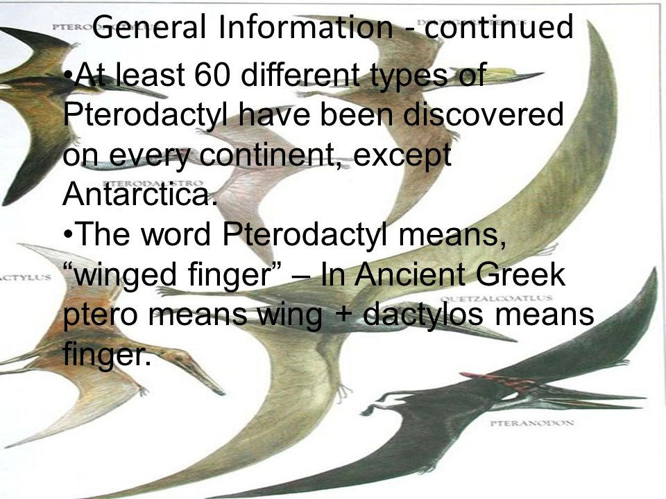 Physical Characteristics The Pterodactyl had a wing span of 40 feet in length.