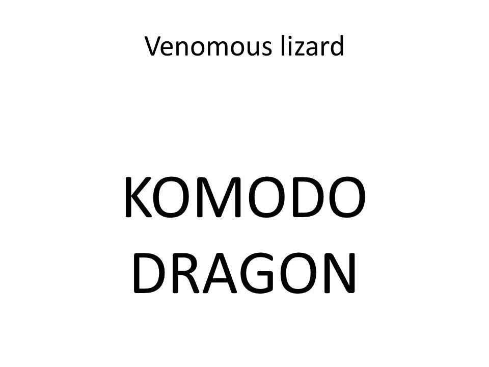 Venomous lizard KOMODO DRAGON