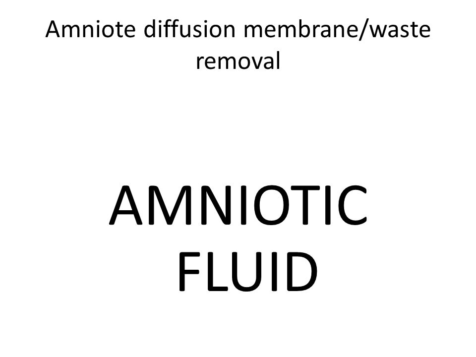 Amniote diffusion membrane/waste removal AMNIOTIC FLUID