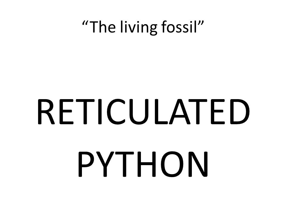 The living fossil RETICULATED PYTHON