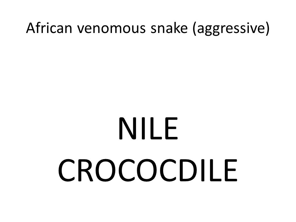 African venomous snake (aggressive) NILE CROCOCDILE
