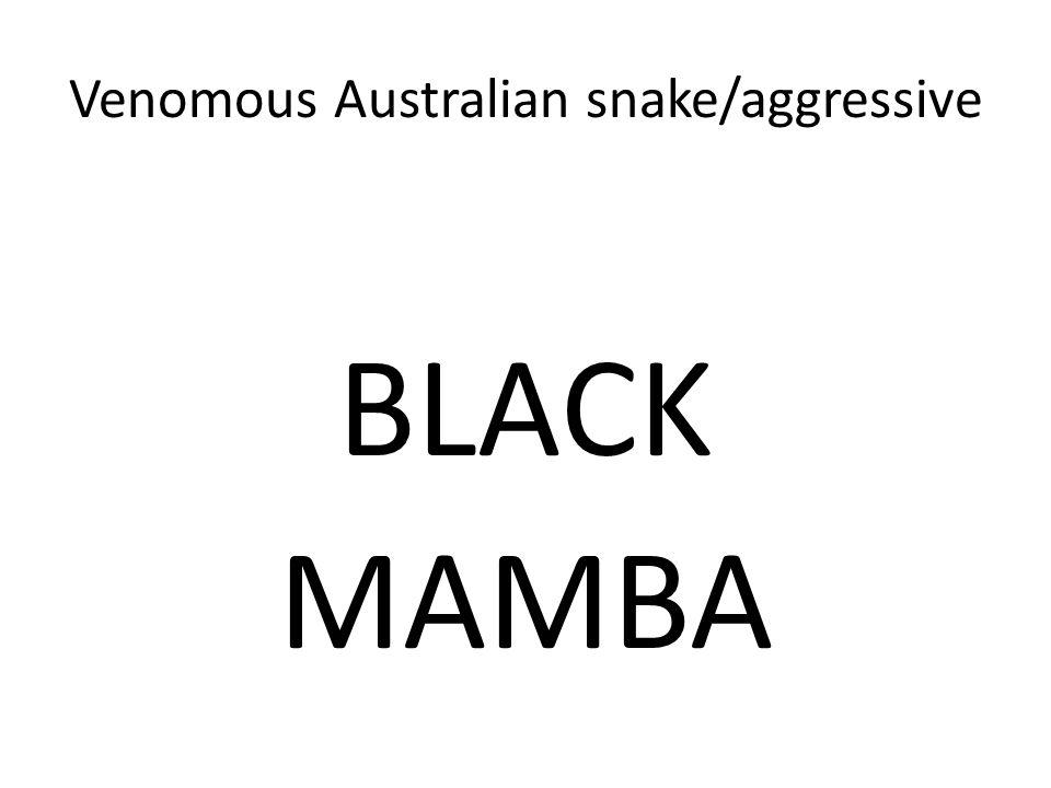 Venomous Australian snake/aggressive BLACK MAMBA